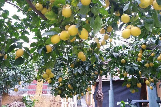 Lemon scent in the citrun garden - Cosy comfortable cottage with private garden,parking lot,close by the sea, WI-FI - Monterosso al Mare - rentals