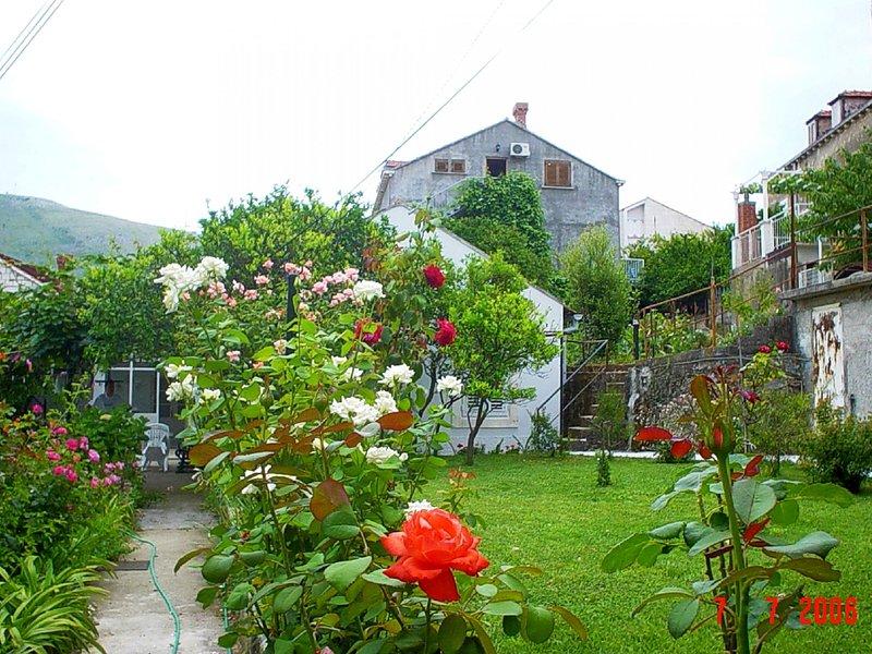 house - Ivan S SA1(2) - Dubrovnik - Dubrovnik - rentals