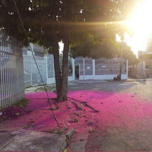 El Solaz del Viñedo Posada - Image 1 - Valencia - rentals