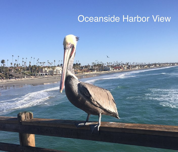 Pete the pelican greets all our guests on the Oceanside pier. Pete loves for you to take his photo. - 100 % Satisfaction Guarantee ....Beach Livin' - Oceanside - rentals