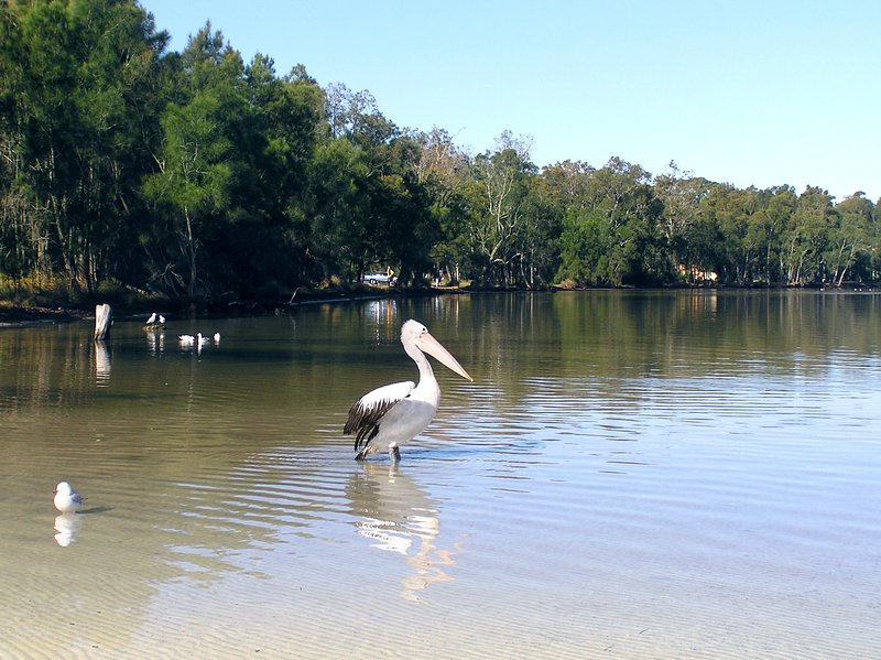 Wildlife at the base of the garden and the pristine waters of St Georges Basin - great fishing! - Paradise Bungalow Waterfront 3bdr,sleeps7,air-con,PETS,golf,watersports,NatPksJB - Sanctuary Point - rentals