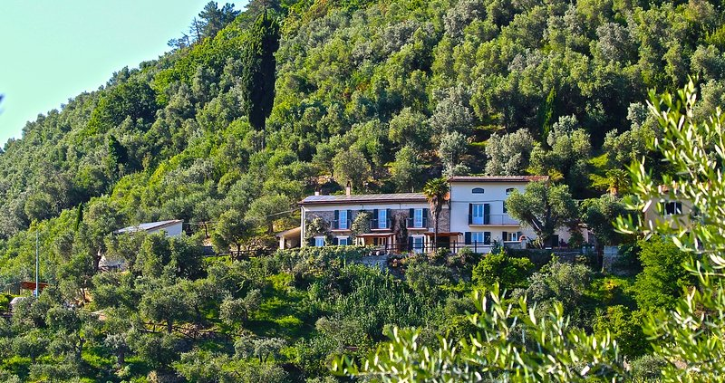 Front of both houses in olive grove setting, sun terrace, nature, great views, super pool - perfect! - Pisa countryside holiday home rental with pool - Pisa - rentals