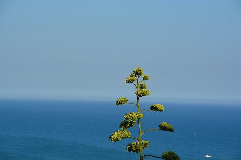 Paesaggio: Mare Mediterraneo visto da San Leone - MEDITERRANEO e TEMPLI: Natura,Cultura,Folklore nella sacra del MANDORLO IN FIORE - Agrigento - rentals