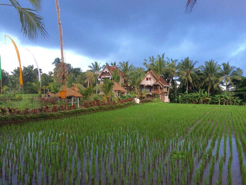 The Rice Joglo Eco-Luxury Retreat  - The Treehouse - Image 1 - Ubud - rentals
