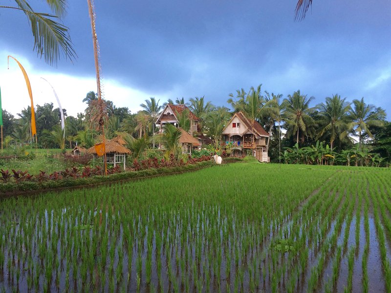 Unique Eco-Luxury Rice Field Retreat close to Ubud Centre - The Treehouse - Image 1 - Ubud - rentals