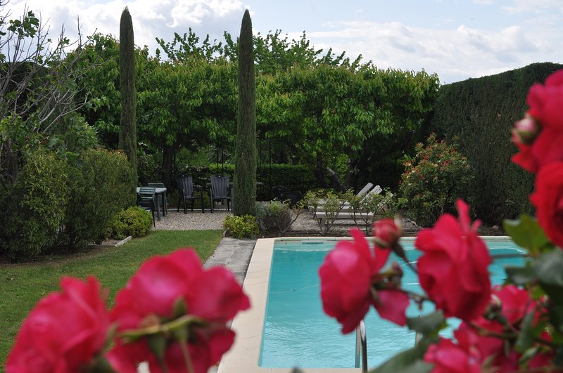 Pool and garden area as seen thru the rose bush in June - Stunning Medieval Luberon Village House  (Pool) - Gordes - rentals