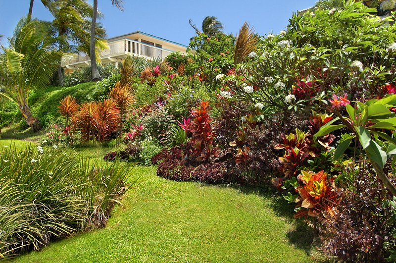 The Bird of Paradise home - Bird of Paradise, 4BR,3.5BA, private warm pool, walk to beaches, wonderful views - Poipu - rentals