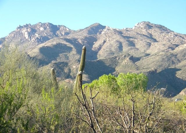 Wake up to the morning sun beaming off the Catalina Mountains! - Image 1 - Tucson - rentals