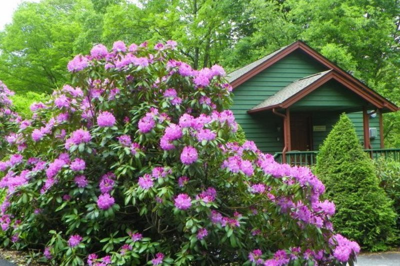 1BR Getaway Cottage in Yonahlossee Resort, Minutes to Boone and Blowing Rock - Image 1 - Boone - rentals