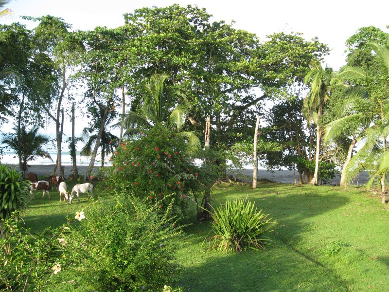 The front yard.  Yes that's the beach and those are wild horses! - Pedros Place Two Bedroom Oceanfront Hideaway on the Sand at Black Beach - Puerto Viejo de Talamanca - rentals