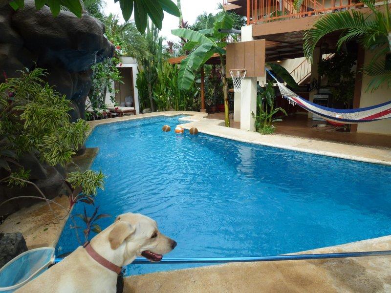 The pool at Casa Bambora - Casa Bambora, Fully Equipped Ocean View Studio - Tamarindo - rentals