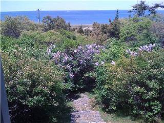 1331 - CHAPPY COTTAGE WITH SPECTACULAR VIEWS OF EDGARTOWN HARBOR & LIGHTHOUSE - Edgartown vacation rentals