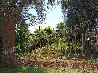1 bedroom House with Deck in Sant'Agata sui Due Golfi - Sant'Agata sui Due Golfi vacation rentals