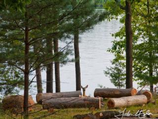 BREEZY on Lake of Bays (wheelchair accessible) - Lake of Bays vacation rentals