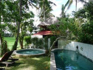 Damai from the swimming pool - Damai: beautiful house on rice fields in Ubud Bali - Ubud - rentals