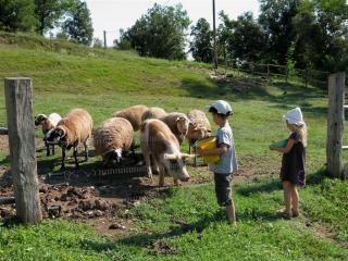 Mas Planella - Feeding the animals - Holiday house to rent, La Garrotxa - Mas Planella. - Catalonia - rentals