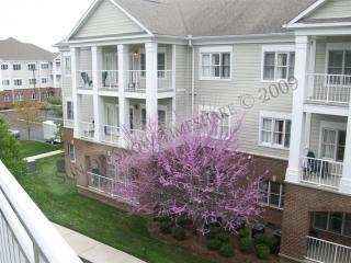 Wyndham Nashville, 50% disc, walk to Opryland! - Nashville vacation rentals