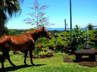 Hilltop Legacy Vacation Rental - Hilo vacation rentals