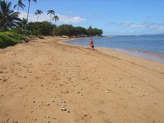 Maui Sunset  A204 1Bd 1 Ba Oceanfront Property. Great Rates!! Sleeps 5 - Kihei vacation rentals