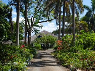 Lime Tree - Ocho Rios vacation rentals