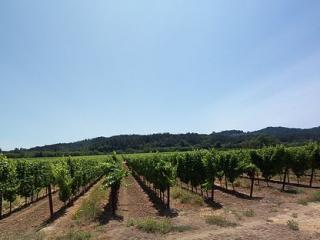 Big Oak House - 30 Dry Creek Vineyard Acres - Healdsburg vacation rentals