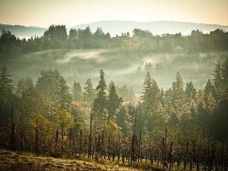 Lavender Cottage in Wine Country Near Sonoma Coast - Sebastopol vacation rentals
