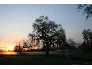 Sunrise - Come enjoy the Oaks of Olivet - Santa Rosa - rentals