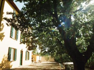 The Yellow House in rural Italy large private pool - Civitella d'Agliano vacation rentals