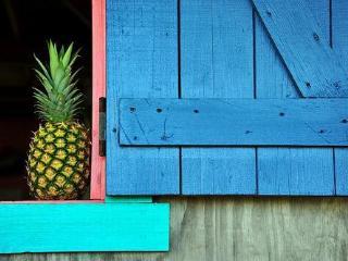 La Finca caribe private rustic retreat for groups - Vieques vacation rentals