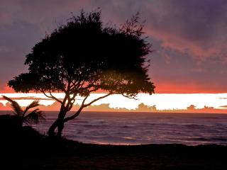 Ground floor, check out the view!, 30 seconds to our beach, - Kapaa vacation rentals