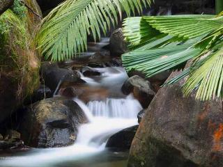 Daintree Secrets Rainforest Sanctuary - Daintree vacation rentals