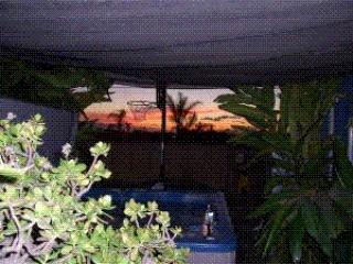 spa_sunset.GIF - Pet Friendly beach cottage with private yard & spa - Encinitas - rentals