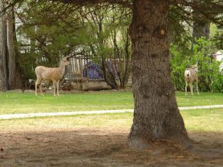 Bales Bungalow - Cody vacation rentals