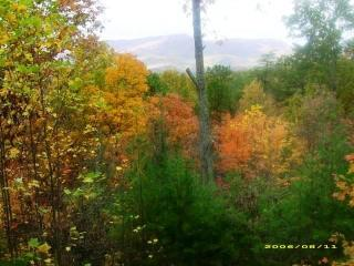 Nice Cabin with Internet Access and Dishwasher - Pigeon Forge vacation rentals
