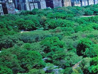 Three Bedroom Residence (Suite 1101-62) - New York City vacation rentals