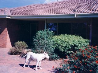 Lovely House with Garden and Kettle - Busselton vacation rentals