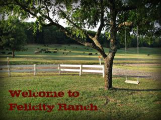 Felicity Ranch - over 180 acres to explore! - Mountainburg vacation rentals