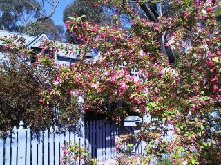 Lavender Manor - Beaches and Mountains Girls Getaways Venue - Blackheath vacation rentals