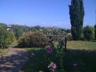 old countryhouse with pool immerse in olivetrees - Lazio vacation rentals