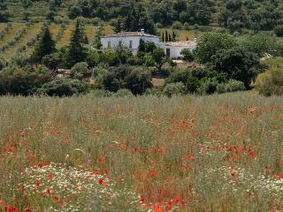 The White Olive - Big friendly house - Ronda vacation rentals