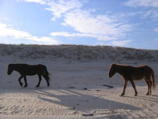 Oceanside Townhouse AL'MOST Heaven - Corolla vacation rentals