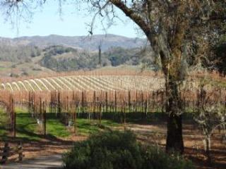 Starlite Vineyards House - Geyserville vacation rentals