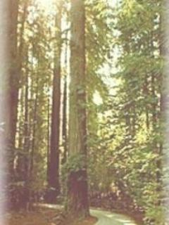 One way Redwood filled road to cabin-great for walking and kid bike rides - Rustic Cabin with River and Redwoods view - Redway - rentals