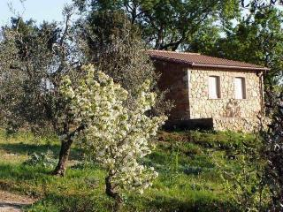 The Almond Tree, farm holidays in Tuscany 4+2 beds - Suvereto vacation rentals