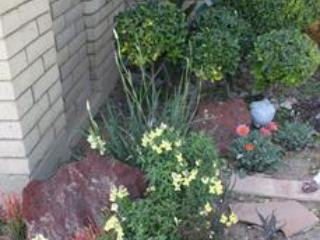 Entrance and Front Garden - Quiet and Elegant Retreat in Central Phoenix - Phoenix - rentals