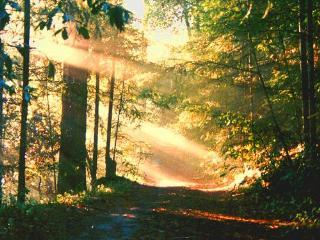 Secluded Hillside Hideaway Offers Elegance/Comfort - Forestville vacation rentals