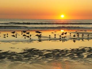 Magical Large Family Beach House, Great Location! - Saint Augustine Beach vacation rentals