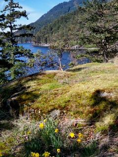 Daffodil Cove Cottage on the ocean - Salt Spring Island vacation rentals