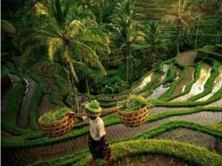 Charming Home in Lush Tropical Setting, Ubud, Bali - Ubud vacation rentals