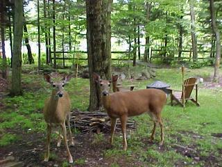 Secluded Lakefront Getaway   LABOR DAY W/E $895 !! - Mount Pocono vacation rentals